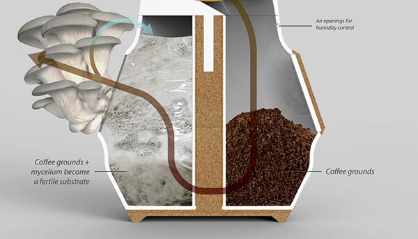 Grow Mushroom On Top Of Coffee Grounds: a New Coffee Ecosystem