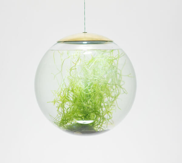 The Terrarium Lamp: a Unique Viewing Perspective of Plants