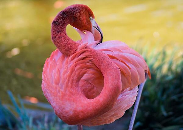 Magnificent Photos of Flamingos