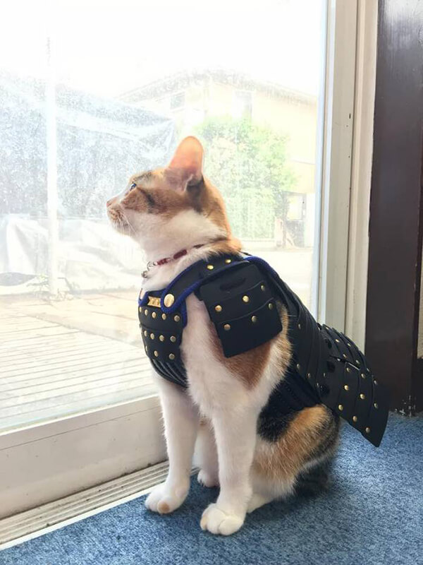 Special Japanese Samurai Armour for Your Pets