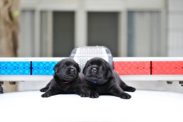 Adorable Puppies Join Taiwan's National Police Agency