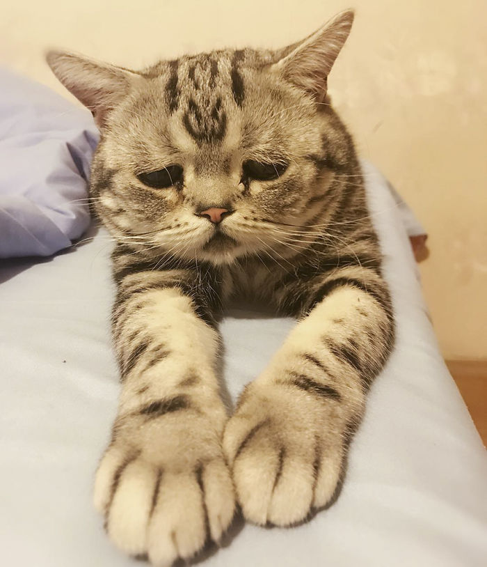 The Saddest Cat In The World?