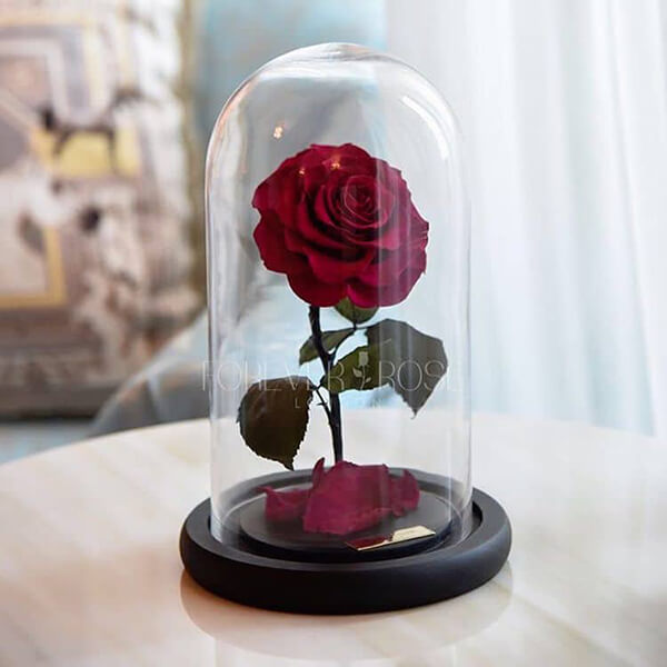 Forever Rose: the Rose Stands At Least 3 Years With Water or Sunlight