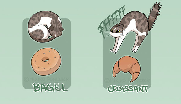 Do You Know Cats are More Bread Thank You Think