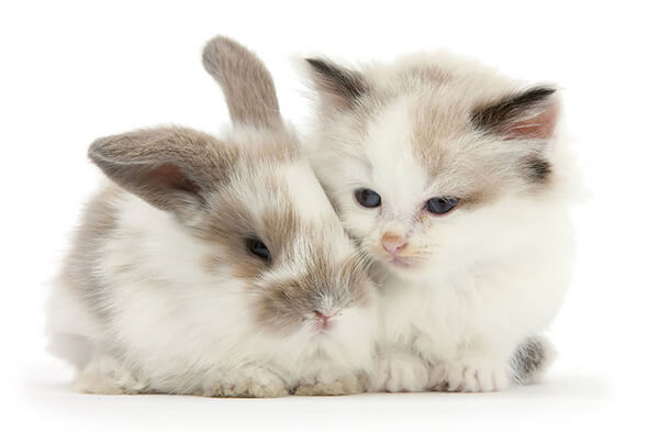 Pet Doppelgängers: Adorable Photos of Cats and Rabbits Share Same Colors