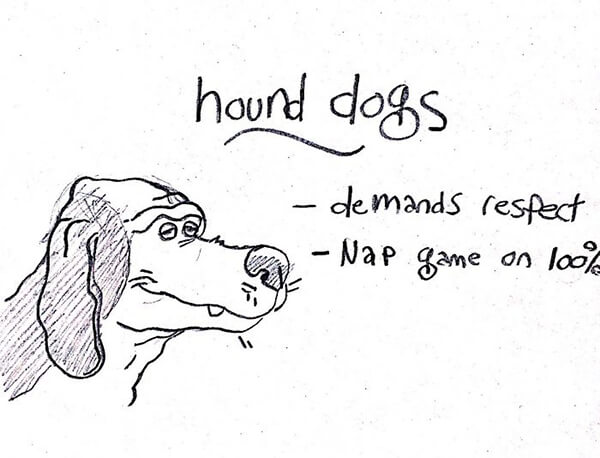 Hilarious Guide of Dog Breed Help you to Choose Your Next Dog