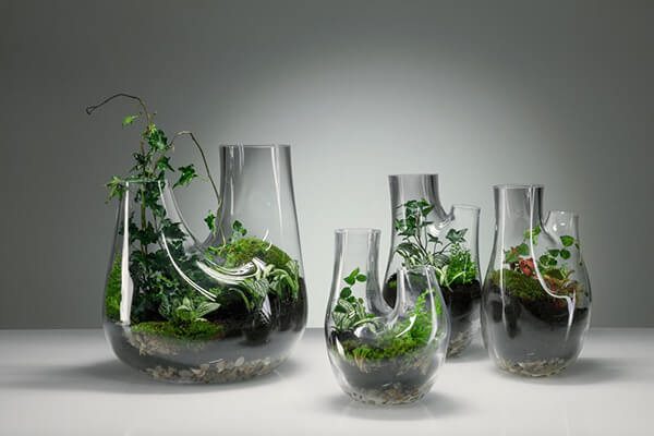 Glass Terrarium: Chic Indoor Home Garden