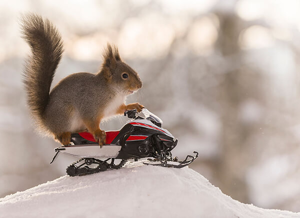 Adorable Winter Squirrel Olympics by Geert Weggen
