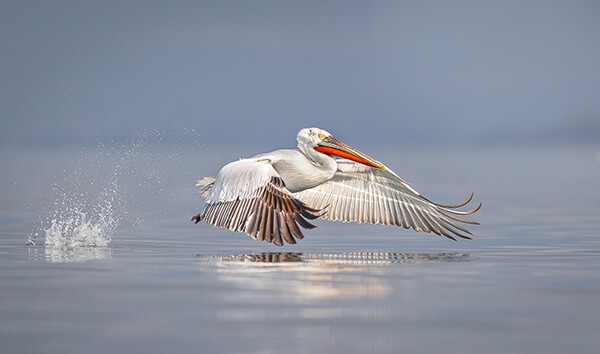 Amazing Shortlist for the 2018 Bird Photographer of the Year