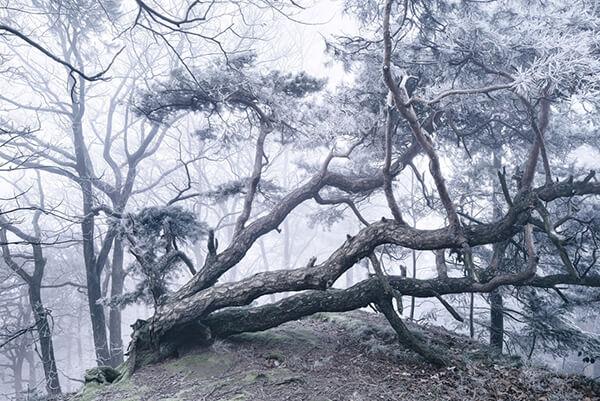 Winter's Tale: Breathtaking Photography by Kilian Schönberger