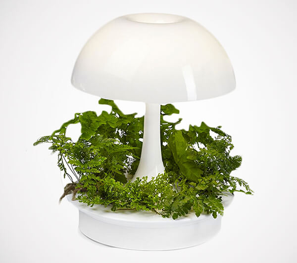 Ambienta: Living Table Lamp