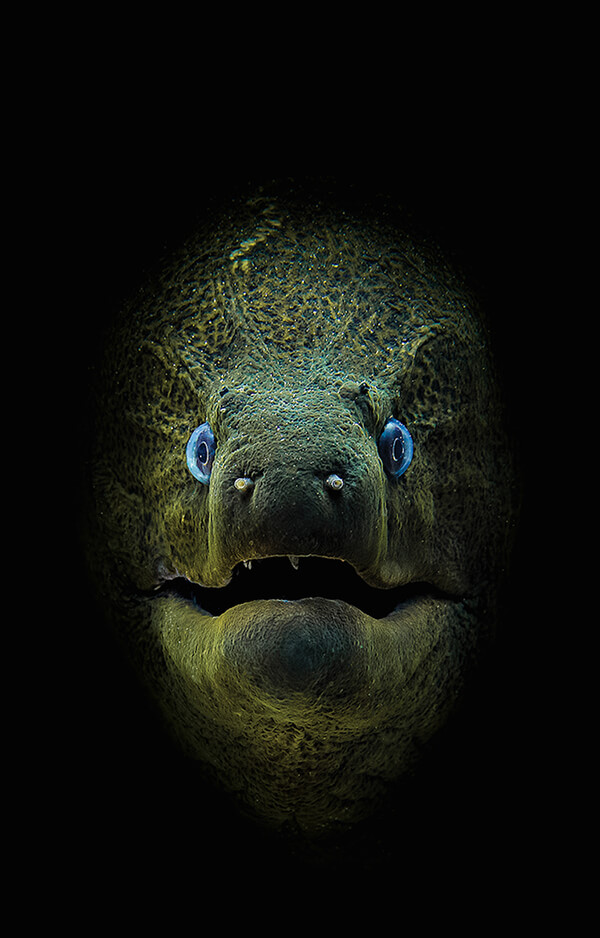 Stunning Underwater Photos From Scuba​ ​Diving​ ​Magazine Contest