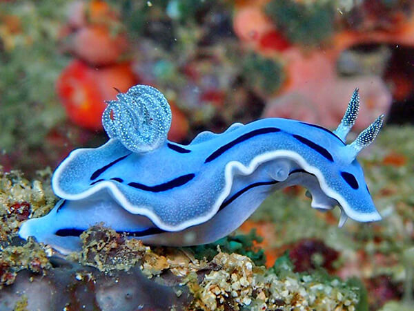 One Type of the Most Amazing Animal - Sea Slugs