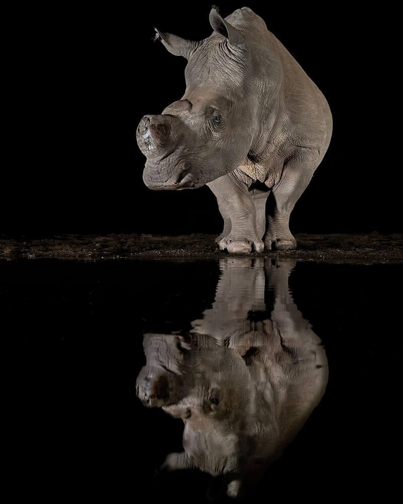 Amazing Wining Photos from Prestigious Siena International Photo Competition