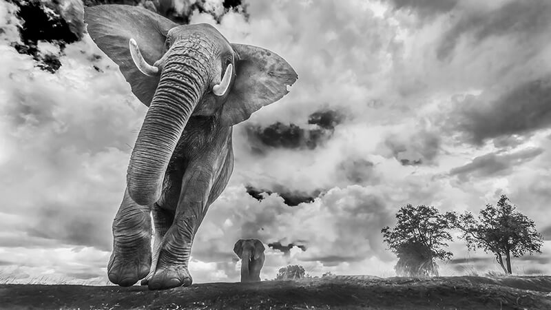 Amazing Wining Photos from Prestigious Siena International Photo Competition