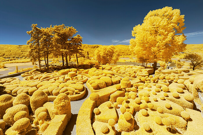 Infrared Photographs in Bright Yellow Hues by Pierre-Louis Ferrer