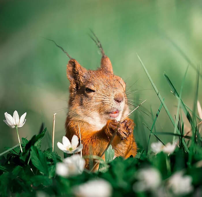 Fairy Forests in Finland is Heaven for Wild Animals