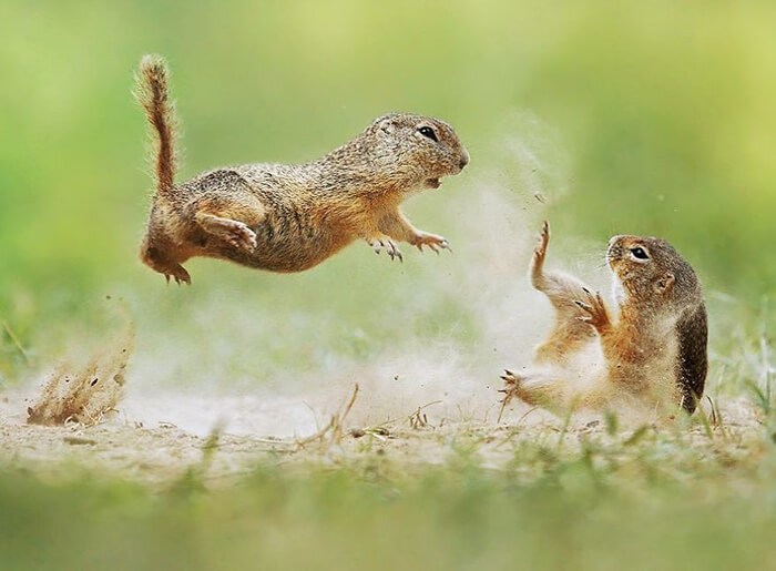 Adorable Photograph of Small-size Wildlife by Julian Rad