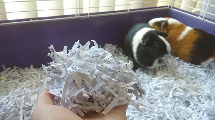 7 Clever Uses for Shredded Paper Around the Homestead