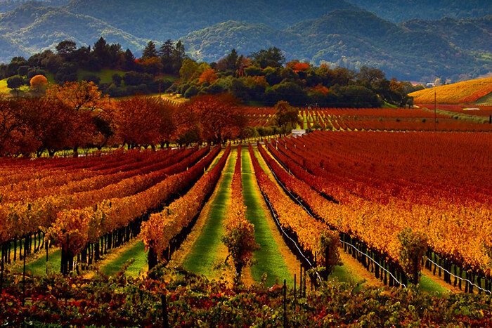 Tips for Planning a Trip to Napa and Sonoma