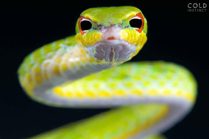 Stunning Photos of Cold-Blooded Animals on Earth