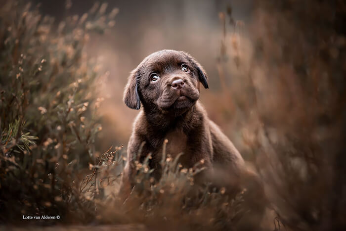 Winning Photos of 2019 Dog Photographer of the Year Contest