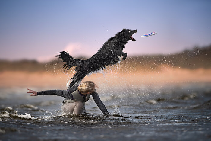 Dog In Action! Gravity-Defying Photos of Determined Dogs in Mid-Air