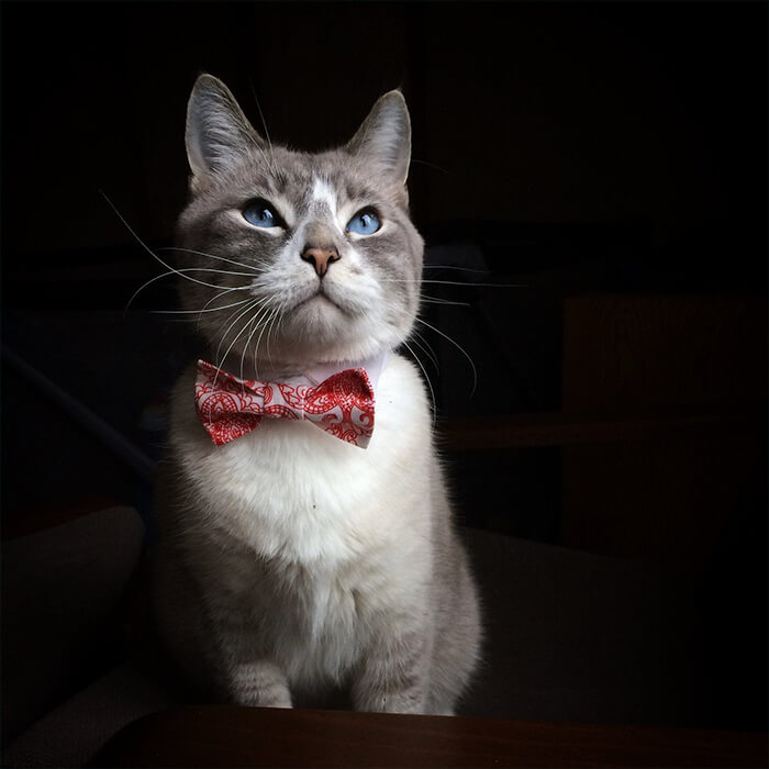 There is a Thing Called Cat Neckties