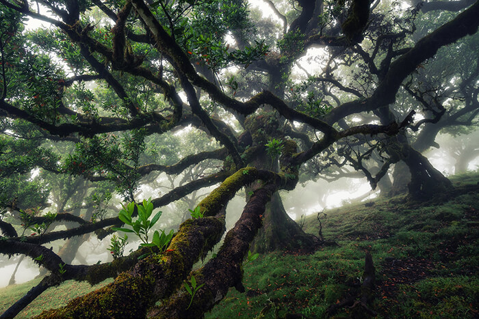 Stunning Tree Photographs from All Seasons by Martin Podt