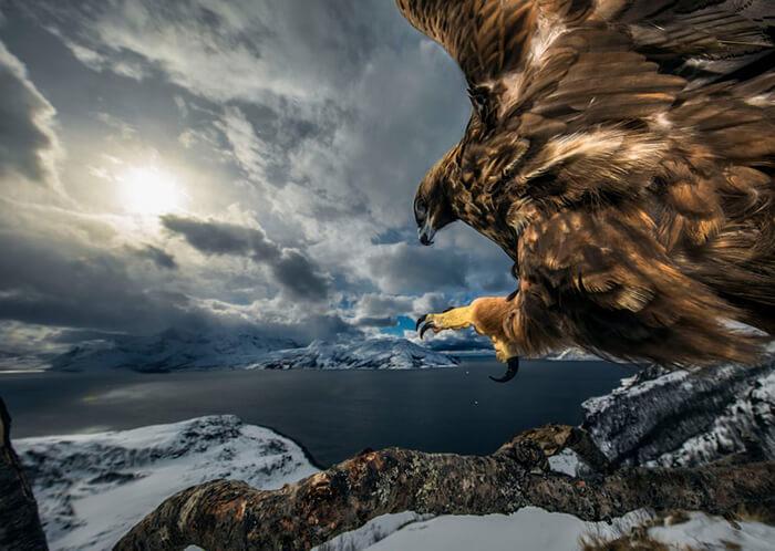 Birds behaviour winner: Land of the Eagle by Audun Rikardsen, Norway