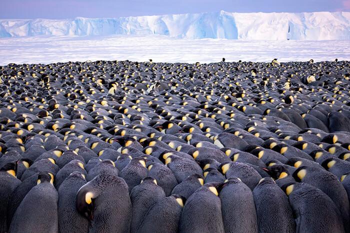 Wildlife Photographer of the Year portfolio award winner: The Huddle by Stefan Christmann, Germany