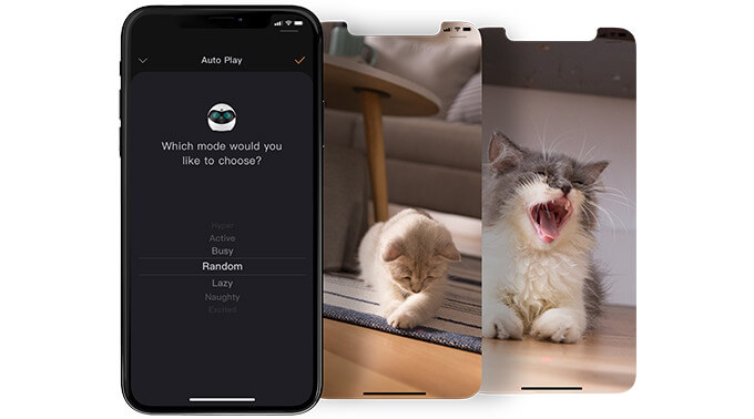 EBO: the Smart Robot that Keeps Your Cat Happy When You're Not Around
